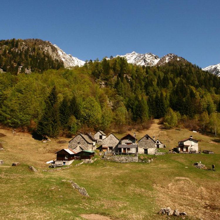 Alpe Bee - Valle Antigorio